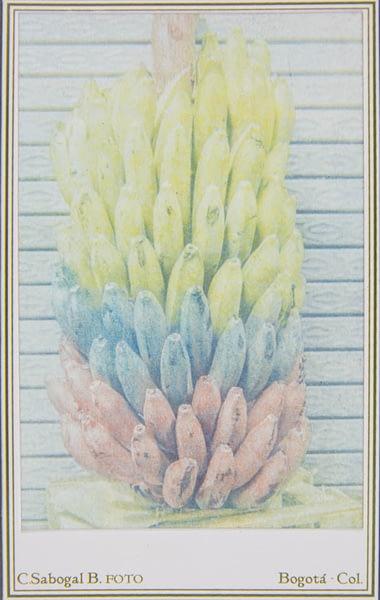 Tarjeta de visita de racimo de plátanos hecha en procesos fotográficos antiguos