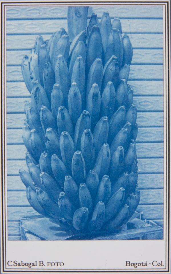 Tarjeta de visita de racimo de plátanos hecha con procesos fotográficos antiguos