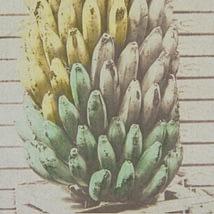 """imagen enlace al portafolio de la serie """"Estudio de plátanos"""" realizada con procesos híbridos (fotografía química experimental)"""